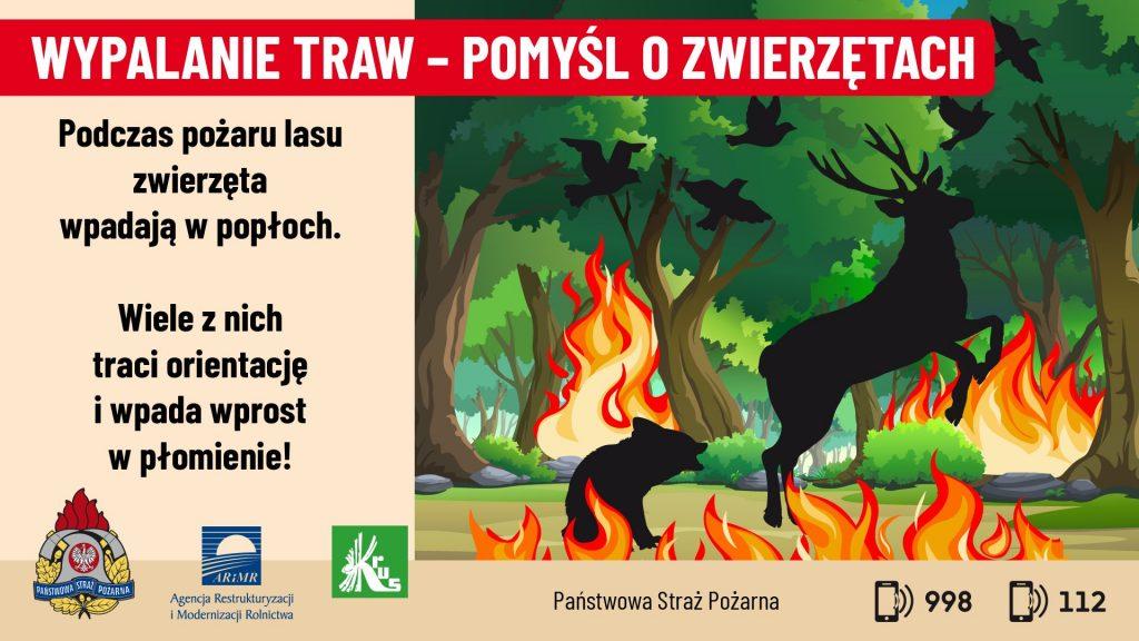 uciekające dzikie zwierzęta przed pożarem