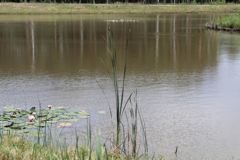 zbiornik retencyjny w Czarkowie