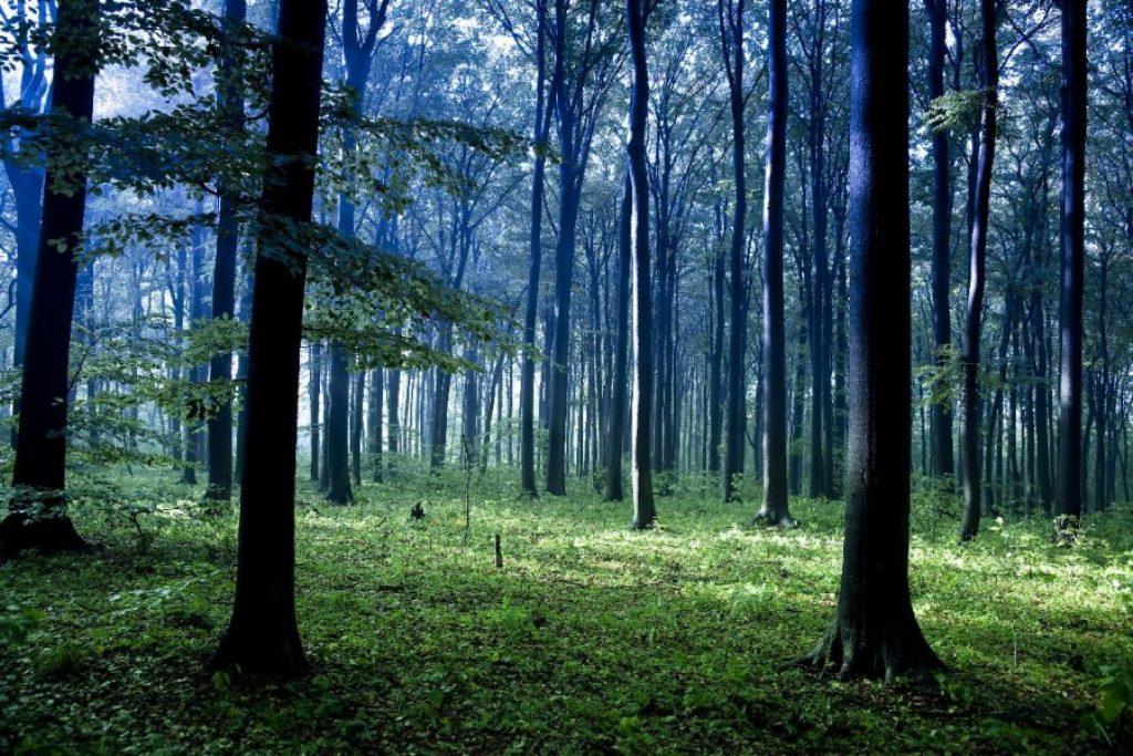 las w rezerwacie Segiet